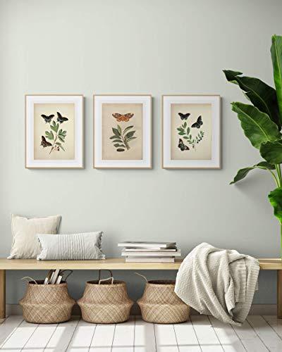 LAMINAHOME Set de tres láminas decorativas para enmarcar mariposas. Cuadros...