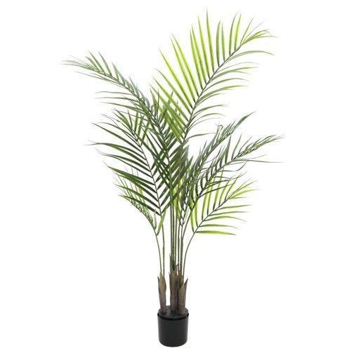 Euro Palms 82509440 Großblatt-Areca 125 cm