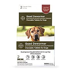 5 Best Dog Dewormers Over the Counter (2019)   Canine Weekly
