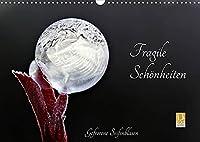 Fragile Schoenheiten - Gefrorene Seifenblasen (Wandkalender 2022 DIN A3 quer): Gefrorene Seifenblasen ... faszinierende Schoenheiten (Monatskalender, 14 Seiten )