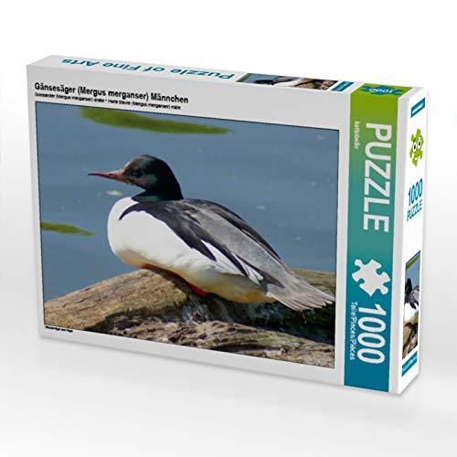 CALVENDO Puzzle Gänsesäger (Mergus Merganser) Männchen 1000 Teile Lege-Größe 64 x 48 cm Foto-Puzzle Bild von Kattobello