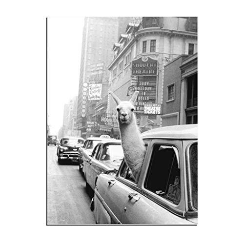 Karen Max Lama in einem Taxi auf dem Times Square Leinwanddruck und Poster Vintage Lama Print New York City Photo (90x140cm-)