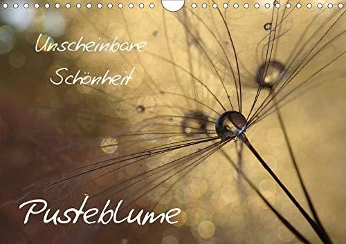Unscheinbare Schönheit - Pusteblume (Wandkalender 2020 DIN A4 quer): Unscheinbare Schönheit am Wegesrand und auf Wiesen (Monatskalender, 14 Seiten ) (CALVENDO Natur)