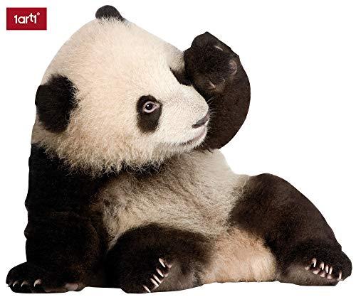 1art1 Bären - Panda-Baby Wand-Tattoo | Deko Wandaufkleber für Wohnzimmer Kinderzimmer Küche Bad Flur | Wandsticker für Tür Wand Möbel/Schrank 48 x 40 cm
