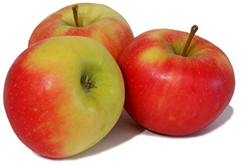 ' Elstar ' - Bodensee-Apfel vom Rosenhäusle (5kg)