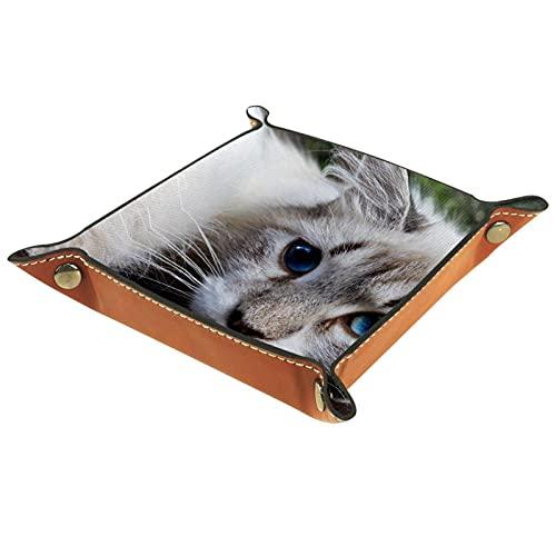 gatto bianco con occhi azzurri primo piano, Valigia Vassoio in Pelle PU Catchall Vassoio Gioielli Key Tray Desk Storage Plate per Chiave Moneta Telefono Gioielli Dice Tray