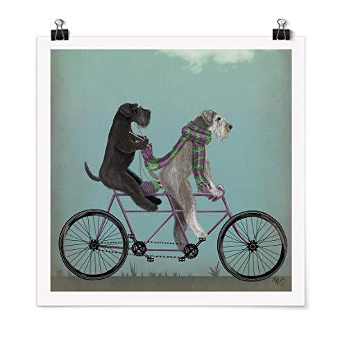 Bilderwelten Poster Cuadro Cycling - Schnauzer Tandem Cuadrado, Mate 70 x 70cm