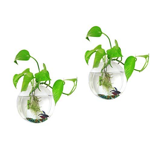 Ivolador - Maceta para Colgar en la Pared, Tubo de ensayo para Flores, jarrón de Mesa, terrariumin, Soporte de Madera, propagación de Plantas hidropónicas