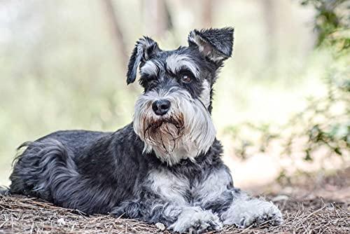 Pintura de diamante para niños Schnauzer Lindo perro mascota Animal Decoración del hogar Bordado Carácter Mosaico Fabricación