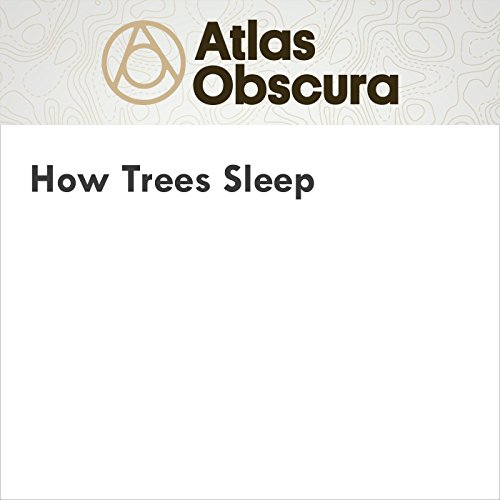 How Trees Sleep audiobook cover art
