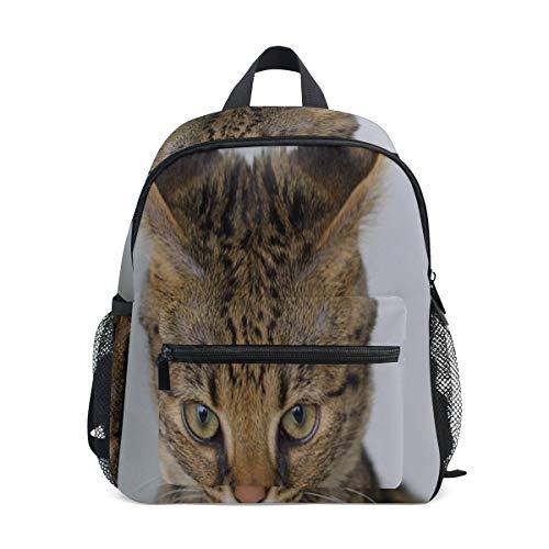 Mochila pequeña para Senderismo Savannah Cat Closeup Feline Hybrid Serval Domestic Girl Mochila pequeña Tamaño Hebilla Frontal en el Pecho para Viajes Escolares