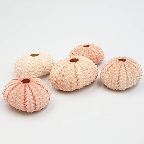MaxJam Pack de 5 erizos de mar rosa brillante de 4 cm, conchas náuticas