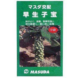 特殊キャベツ 種 早生子宝 小袋(約1.5ml)