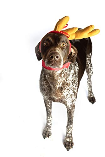 ComfyCamper Dog Reindeer Antler Headband Dog Costume for Halloween and Xmas, M