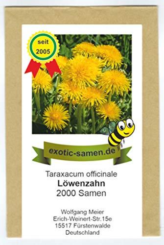 Taraxacum officinale - Löwenzahn - Salat- u. Heilpflanze - Bienenweide - 2000 Samen