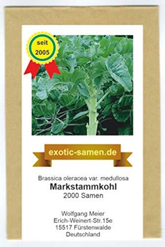 Markstammkohl - vergessenes Gemüse - Brassica oleracea - 2000 Samen