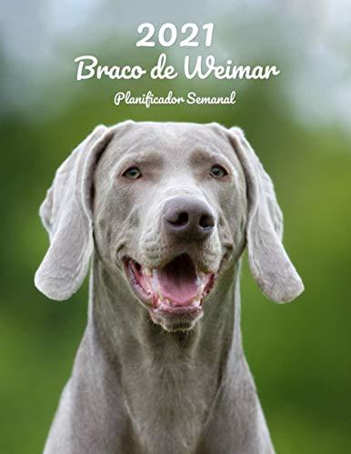 2021 Braco de Weimar Planificador Semanal: 123 Páginas | Tamaño A4 | Calendario | 14 Meses | 1 Semana en 2 Páginas | Agenda Semana Vista | En español | Perro