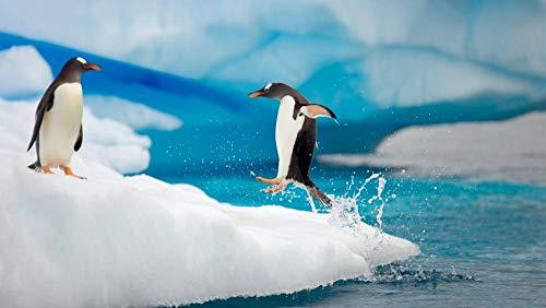 wffmx 1000 Pieces Clásico Desafío para Adultos Rompecabezas Imposible-Pingüino Saltando Rompecabezas De Madera 3D Rompecabezas De Arte En HD Juegos De Juguetes para Niños-75X50Cm