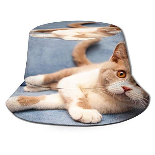 Sombrero de Pescador Unisex Gato Bicolor Blanco está acostado en un sofá Azul Plegable De Sol/UV Gorra Protección para Playa Viaje Senderismo Camping
