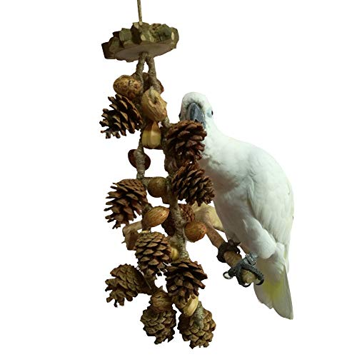 QBLEEV Bird Treats Toy, Parrot Cockatiel Chewing Pine Nuts Toys, Bird Cage Hanging Trim Toys for Conure Parakeet Small Macaw African Grays Cockatoos