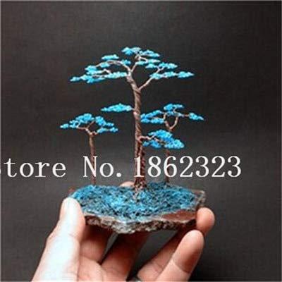 Bloom Green Co. Bonsai 50 piezas de enebro japonés Bonsai Starter Tree Juniperus Procumbens Nana Planta en maceta para el hogar y amp; Jardín fácil de cultivar: 2