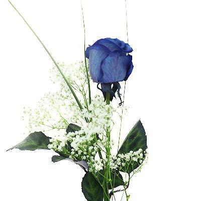 Edle blaue Rose - Deluxe - inkl. gratis Kultvase