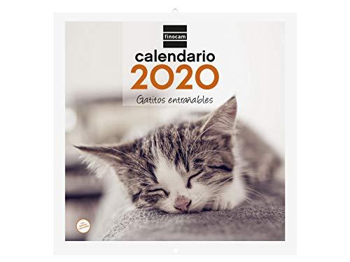 Finocam - Calendario de pared 2020 Imágenes 30x30 Gatitos español