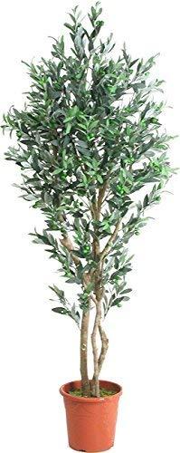 Olivenbaum mit Früchten – Künstlicher Innenbaum, mit echten Holzstämmen, 100 cm hoch