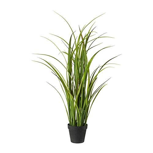 Pflanzen Kölle Wiesengras, 90 cm, im einfachen Kunststofftopf 12,5 x 12,5 cm, grün