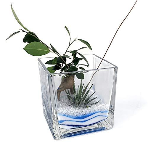 ブロック 15cm グラス アクアサンド2種寄せ植え (ガジュマル・12の巻)