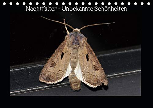 Nachtfalter - Unbekannte Schönheiten (Tischkalender 2020 DIN A5 quer)
