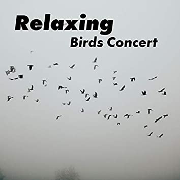 Relaxing Birds Concert – Collection of Stunning Animals Sounds with Gentle Piano