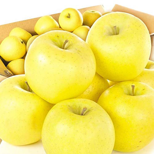 国華園 青森産 シナノゴールド 10kg 1箱 りんご