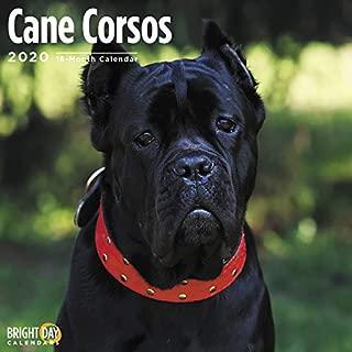 Cane Corsos Wall Calendar 2020