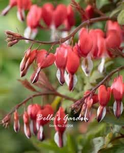 100pcs Multi-couleurs Coeur Begonia Graines Hardy Plantes Graines de fleurs exotiques d'ornement de fleurs Bonsai Graines 1