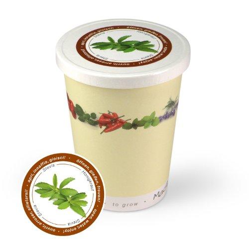 Blumen im Becher TO GROW - Honigkraut / Stevia