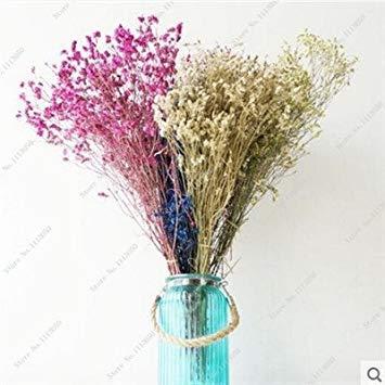 VISTARIC 4: Rare hybride Mixte Rouge Vert Rose Violet Lin Lin Hanging Bonsai Flowewr Graines, Paquet professionnel, 50 graines/Pack, Beau 4
