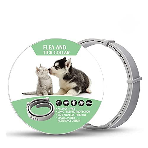 Collari antipulci e antizecche per cani e gatti Collari regolabili impermeabili per cani e gatti 62 cm, 100% Naturale Antiparassitario per Cani per cani e gatti, 8 mesi di protezione