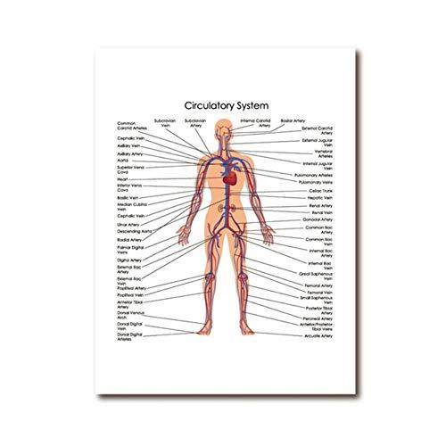Impresiones de la lona Cuerpo humano Diagrama del sistema ci