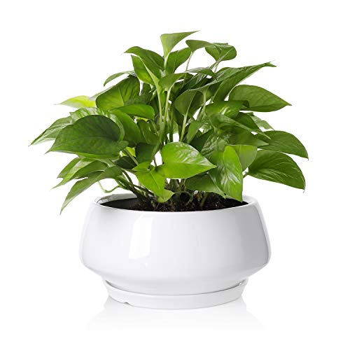 Large Plant Pot - 8.8 Inch Round White Ceramic Planter with Saucer and Drainage Hole for Scindapsus Aureum and Ivy Vine