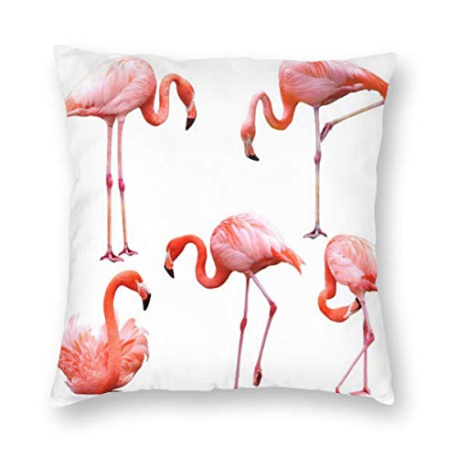 Fantastic Prices! Others Chicago Nets Red Flamingo Wall Square Pillow Multicode Soft and Comfortable 18″x18″