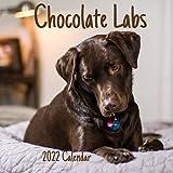 Chocolate Labs Calendar 2022: Chocolate Labs 2022 2023 Calendar,18 Months.