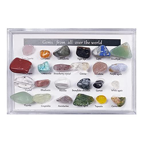 FITYLE Colección de Rocas y minerales de 24 Piezas con Caja de coleccionista / Vitrina, Hoja de identificación, Kit de Cristales de Piedras Preciosas para