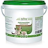 AniForte Indische Flohsamenschalen für Pferde, Hunde & Katzen 1kg - Reich an Ballaststoffen & Schleimstoffen, Indische Flohsamen in Rohkost Qualität, Einzelfuttermittel