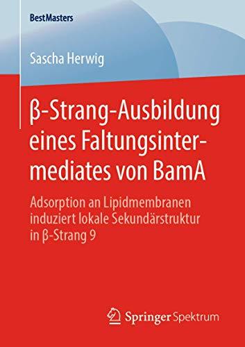 β-Strang-Ausbildung eines Faltungsintermediates von BamA: Adsorption an Lipidmembranen induziert lokale Sekundärstruktur in β-Strang 9 (BestMasters)