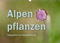 Alpenpflanzen fotografiert von HerzogPictures (Wandkalender 2022 DIN A3 quer): Impressionen von Alpenflanzen ganz nah (Monatskalender, 14 Seiten )