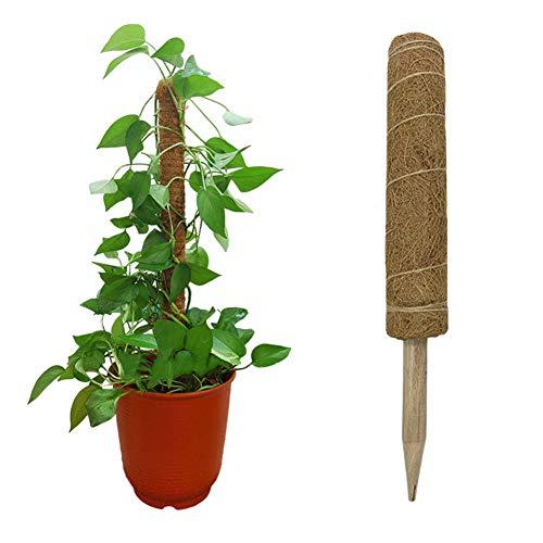 Surakey 1 Stück Pflanzstab Kokos, Pflanzstäbe Rankstab Rankhilfe Blumenstab Kokosstab zur Dekoration aus Natürlicher Kokosfaser Stützpfahl,Verlängerbar, 30CM
