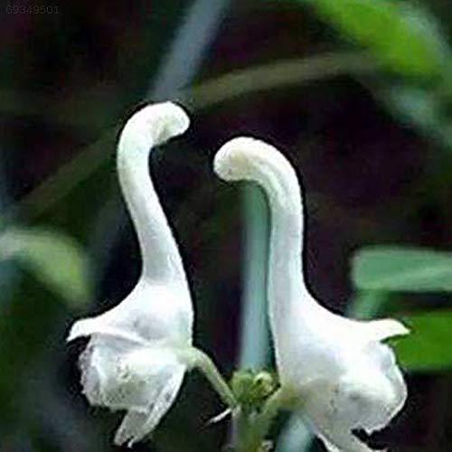 Portal Cool Fefd 100Pcs Rare Swan Blumensamen Easy Care Pflanzen der Staudengarten-Anlagen