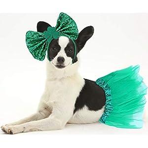 St Patricks Day Girl Dog Costume, Doggie St Patrick's Day Tutu and Bowtie Headband Kit