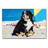 CALVENDO Premium Textil-Leinwand 90 x 60 cm Quer-Format Seebärchen entdecken die Welt - Berner Sennenhunde, Leinwanddruck von Sista-Tierfoto